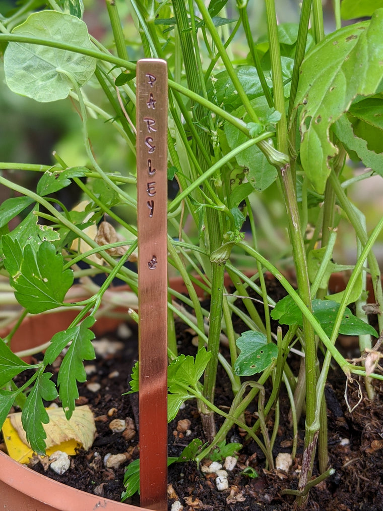 Copper parsley garden marker in a pot