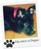 Our new dog Pepper