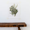 Elizabeth Cameron vegetable print limited edition artichoke