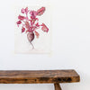 Elizabeth Cameron vegetable print limited edition beetroot