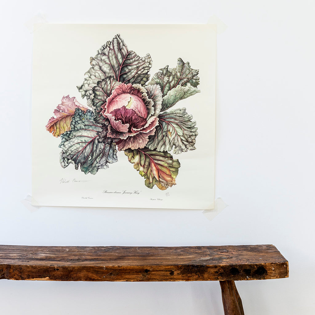 Elizabeth Cameron vegetable print limited edition cabbage