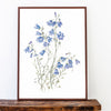 Harebells Limited Edition Print
