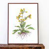 Cowslip Limited Edition Print