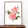 Rose Limited Edition Print