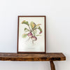Elizabeth Cameron vegetable print limited edition turnip