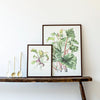 Elizabeth Cameron Rhubarb Watercolour Print Collection