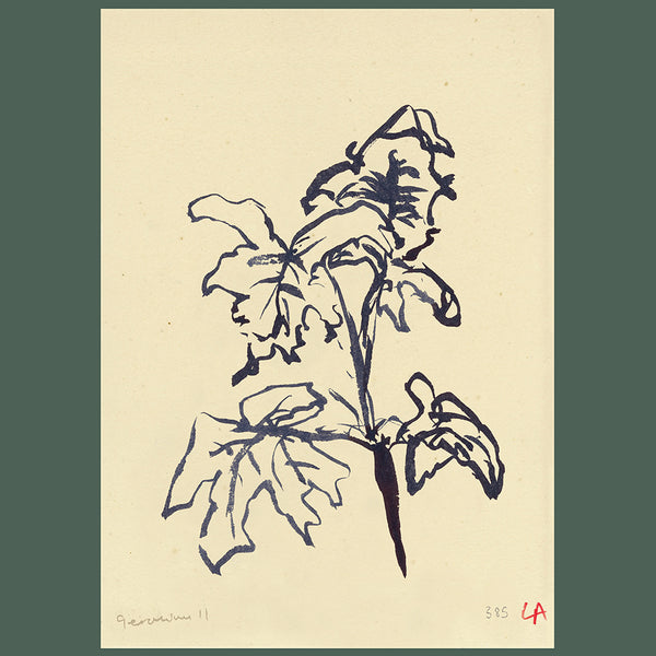 Lucy Auge geranium leave botanical print painting