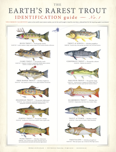 Earth's Rarest Trout Poster