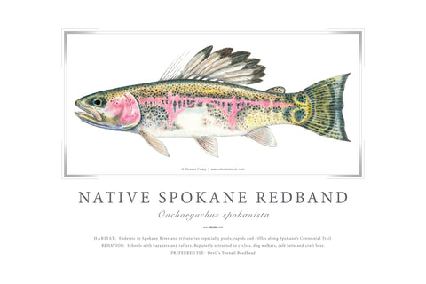 "24"" x 36"" Native Redband Trout Giclée Print"