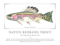 Native Spokane Redband  Print