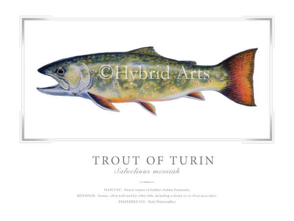 Trout of Turin