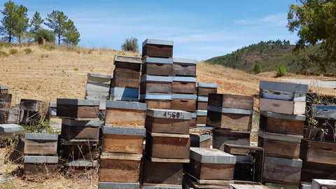 beehives algarve_portuguese raw honey
