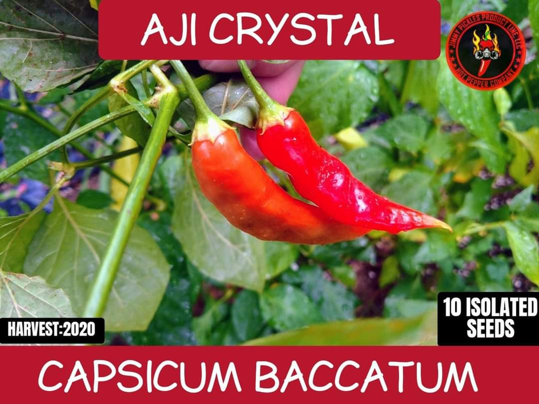 Aji Crystal (Capsicum Baccatum) Mid-Hot- 10 Isolated Seeds