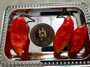 Red Ghost/Bhut Jolokia (Capsicum Chinense) Super Hot- 10 Isolated Seeds
