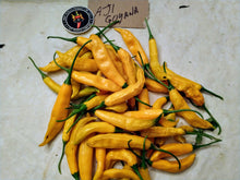 Load image into Gallery viewer, Aji Guyana (Capsicum Baccatum) Hot- 10 Isolated Seeds