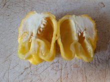 Load image into Gallery viewer, Trinidad Moruga Scorpion Yellow (Capsicum Chinense) 10 Isolated Seeds