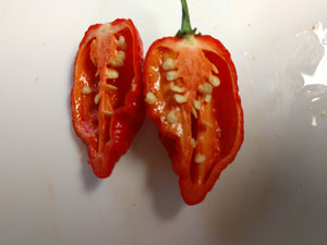 Jigsaw Red (Capsicum Chinense) Super Hot-10 Isolated Seeds