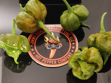 Load image into Gallery viewer, Carolina Reaper Mustard (Capsicum Chinense) Super Hot-10 Isolated Seeds