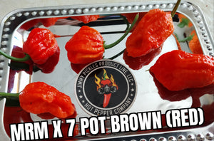 MRM X 7 Pot Brown (Red)(Capsicum Chinense)-Super Hot-10 Isolated Seeds