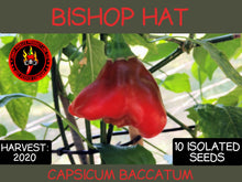 Load image into Gallery viewer, Bishop Hat (Capsicum Baccatum) Mild-10 Isolated Seeds