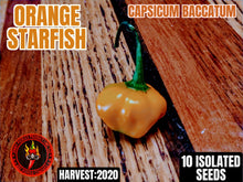 Load image into Gallery viewer, Orange Starfish (Capsicum Baccatum) Mild Heat-10 Isolated Seeds