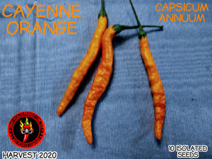 Cayenne Orange (Capsicum Annuum) Mid-Hot- 10 Isolated Seeds