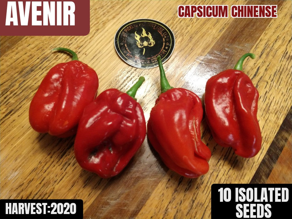 Avenir (Capsicum Chinense) Hot-10 Isolated Seeds