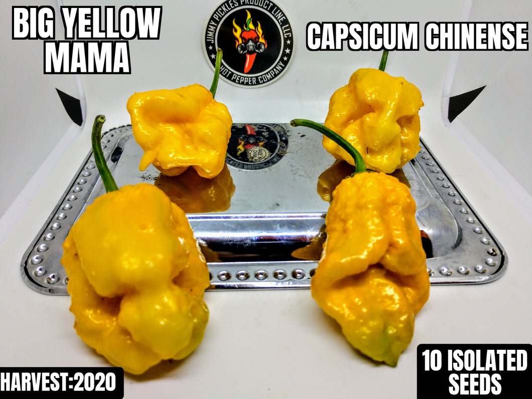 Big Yellow Mama (Capsicum Chinense) Super Hot- 10 Isolated Seeds
