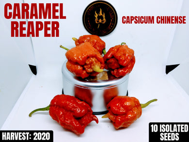 Caramel Reaper (Capsicum Chinense) Super Hot-10 Isolated Seeds
