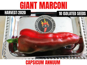 Giant Marconi (Capsicum Annuum) Sweet- 10 Isolated Seeds