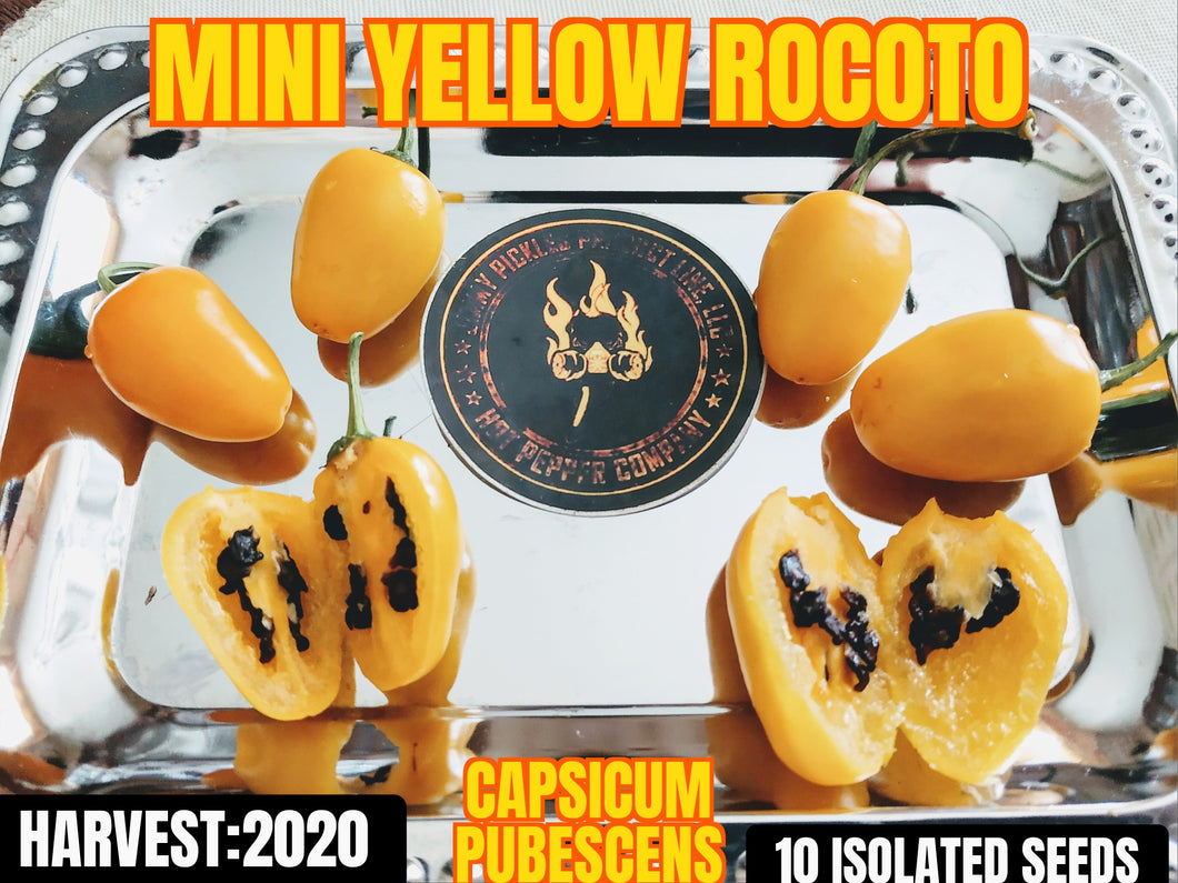 Mini Yellow Rocoto (Capsicum Pubescens) Hot- 10 Isolated Seeds