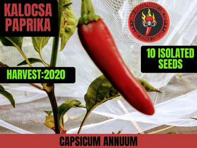 Kalocsa Paprika (Capsicum Annuum) (No Heat-Low heat) 10 Isolated Seeds
