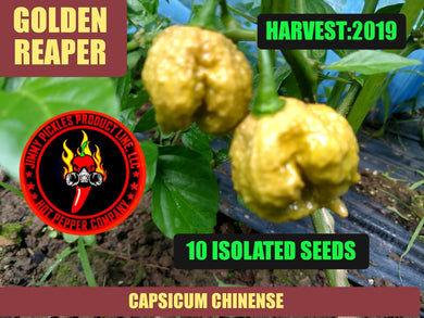 Golden Reaper (Capsicum Chinense) Super Hot-10 Isolated Seeds