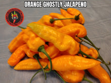 Load image into Gallery viewer, Orange Ghostly Jalapeno (Capsicum Chinense) 10 Isolated Seeds