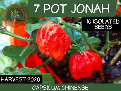 7 Pot Jonah (Capsicum Chinense) Super Hot- 10 Isolated Seeds