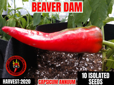 Beaver Dam (Capsicum Annuum) Low Heat- 10 Isolated Seeds