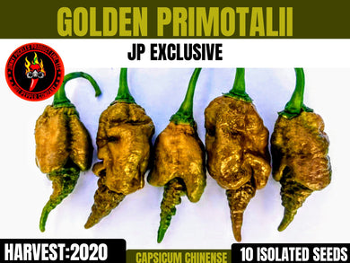Golden Primotalii (Capsicum Chinense) Super Hot- 10 Isolated Seeds