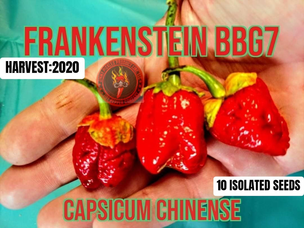 Frankenstein BBG (Capsicum Chinense) Super Hot- 10 Isolated Seeds