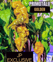 Load image into Gallery viewer, Golden Primotalii (Capsicum Chinense) Super Hot- 10 Isolated Seeds