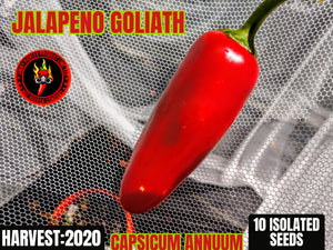 Jalapeno Goliath (Capsicum Annuum) Low Heat- 10 Isolated Seeds