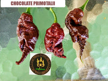 Load image into Gallery viewer, Chocolate Primotalii (Capsicum Chinense) Super Hot- 10 Isolated Seeds