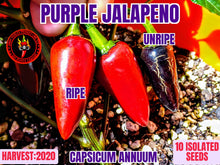 Load image into Gallery viewer, Purple Jalapeno-Heirloom (Capsicum Annuum) Low Heat- 10 Isolated Seeds