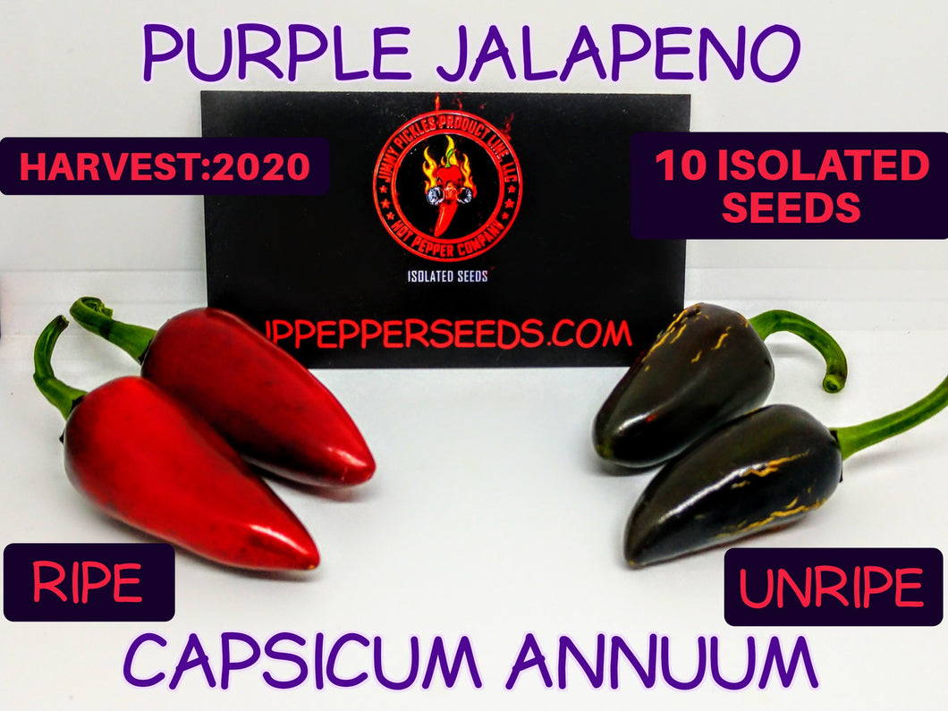 Purple Jalapeno-Heirloom (Capsicum Annuum) Low Heat- 10 Isolated Seeds
