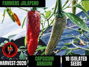 Farmers Jalapeno (Capsicum Annuum) Low Heat- 10 Isolated Seeds