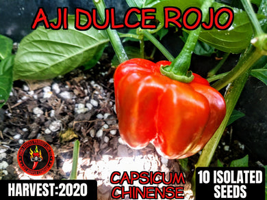 Aji Dulce Rojo (Capsicum Chinense) Low/No Heat- 10 Isolated Seeds