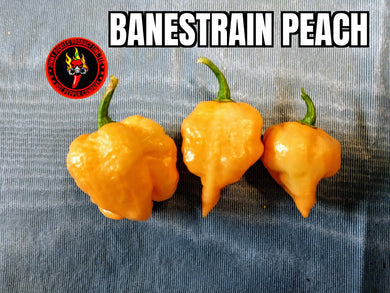 Banestrain Peach (Capsicum Chinense)-Super Hot- 10 Isolated Seeds
