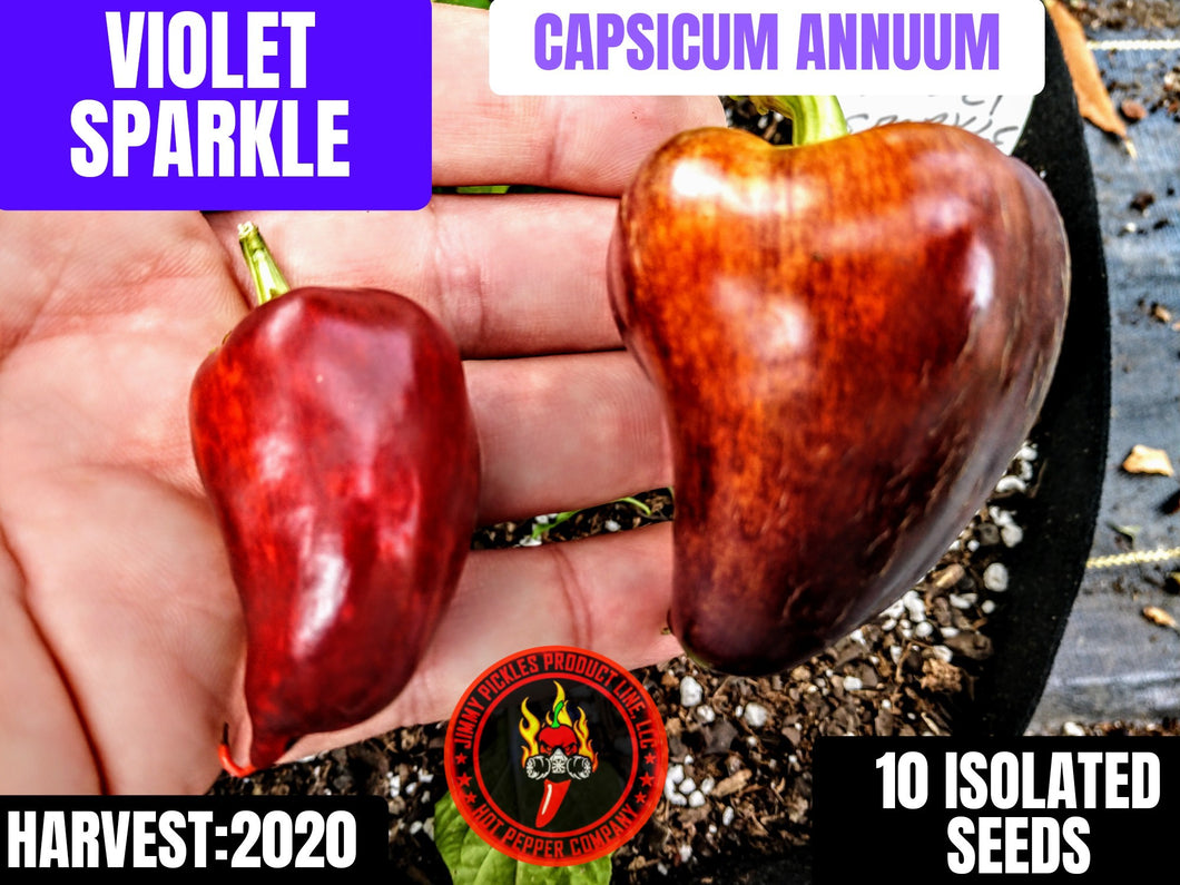 Violet Sparkle (Capsicum Annuum) sweet no heat- 10 Isolated Seeds