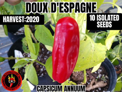 Doux D'espagne (Capsicum Annuum) Sweet- 10 Isolated Seeds