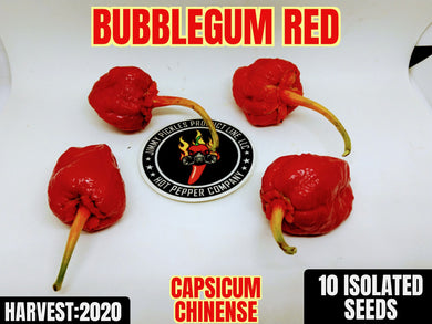 BBG Red (capsicum chinense) Super Hot- 10 Isolated Seeds