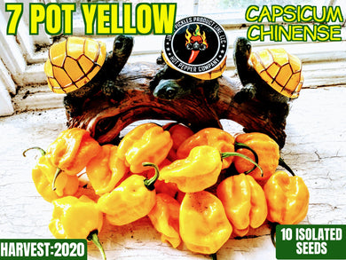 7 Pot Yellow (Capsicum Chinense) Super Hot-10 Isolated Seeds